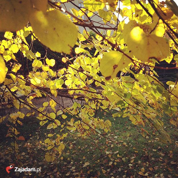 jesień w Rybniku